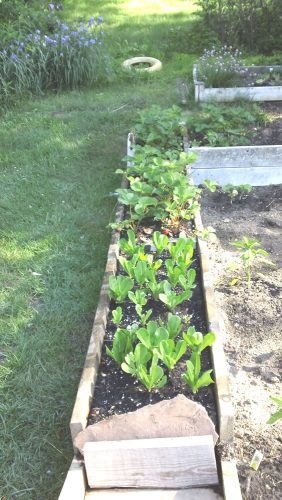 Simply Healthy Life Gardening